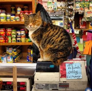 Bodega Cat No Refunds